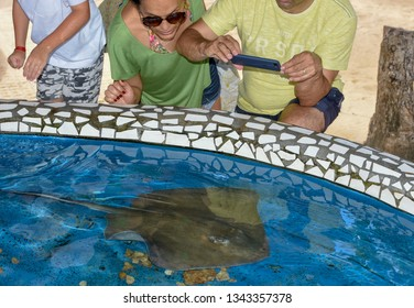 Praia do Forte, Brazil - 31 January 2019: people looking at breed fish on Project Tamar tank at Praia do Forte in Brazil