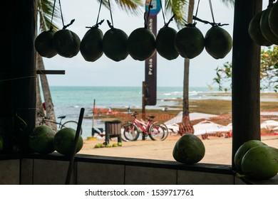 Praia do Forte, Brazil - Circa September 2019: Coconuts for sale and a view of the beach at Praia do Forte, popular beach resort near Salvador, Bahia