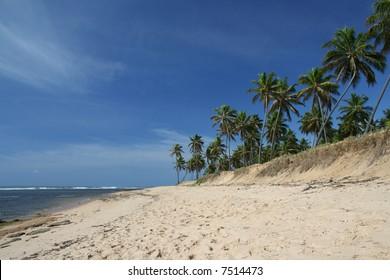 Praia do Forte, a prestigious palm fringed tropical beach located in Bahia, Brazil