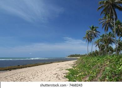 Praia do Forte is a prestigious tropical beach located in Bahia, Brazil