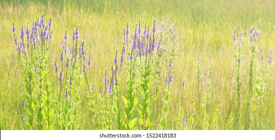 Prairie background: intentionally overexposed effect of purple prairie clover and prairie grasses