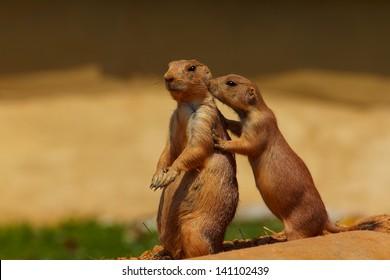 Prairie Dog Friends