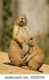 Prairie dog with her baby (focus on the big one)