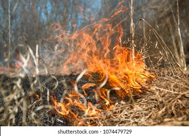 Prairie fire. Dry grass blazes among bushes, fire in bushes area. Fire in shrub kills huge number small animals, especially insects. Climate change, increased frequency fires, destruction of forests