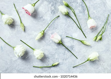 Prairie Gentian Flowers on gray Stone Background (flat lay arrangement). Flower background. Top view. Copy space.