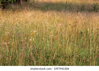 The prairie grasses in early evening sunlight