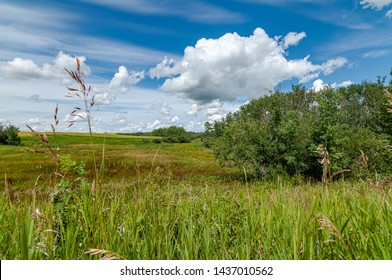 Prairie landscape with grasses, meadows, trees and a bright blue sky with white clouds.