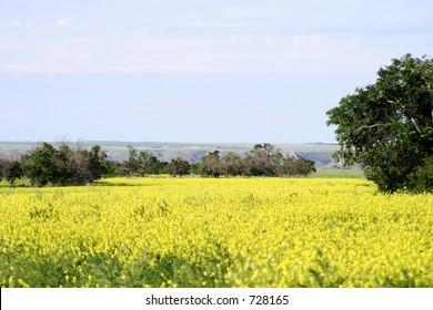 Prairie Landscape on a sunny summer day