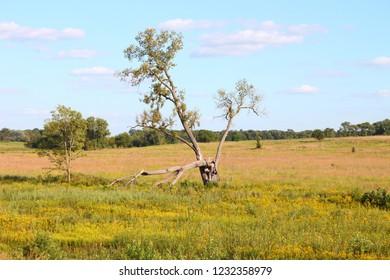Prairie at Nachusa Grasslands of northern Illinois