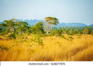Prairie savanna Phra Thong Island, Thailand.
