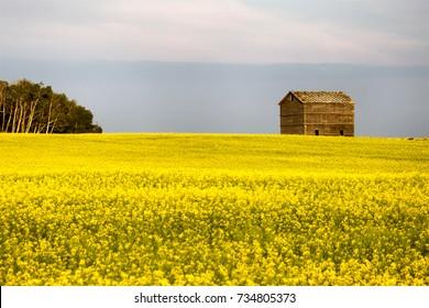 Prairie Scene Saskatchewan summer crop harvest Canada