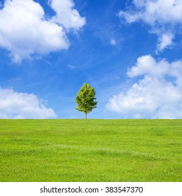 Prairie and tree of fine weather