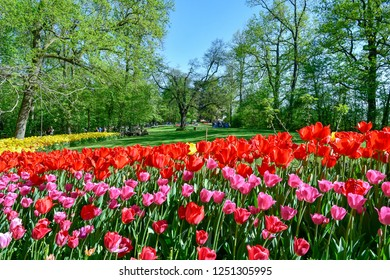 Pralormo / Italy - April 21 2018: Mister Tulip exhibition in the park of the Pralormo Castle: every edition of this botanic event hosting different tulip varieties and a new colorful project, Piedmont