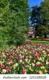 Pralormo / Italy - April 21 2018: Park of the Castle of Pralormo with ancient trees and beautiful bed of multicolored tulips during Mister Tulip event in spring, Piedmont