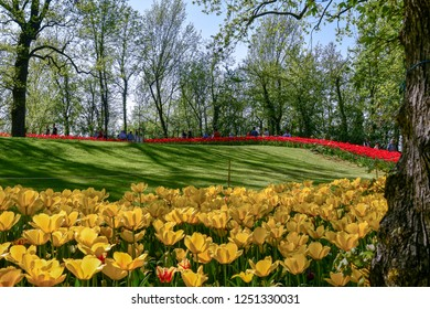 Pralormo / Italy - April 21 2018: Park of the Castle of Pralormo during the annual botanic event Mister Tulip, with beautiful bed of yellow and red tulips, Piedmont