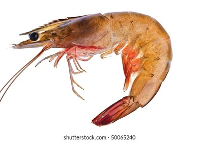 A prawn against a white background