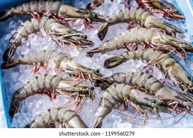 Prawn newly fished and stored in boxes with ice