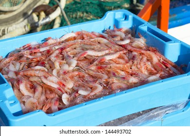 Prawn newly fished and stored in boxes with ice at port of Palamos in the Costa Brava, Catalonia (Spain)