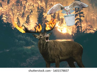 Pray for Australia. Forest in fire. Scared deer with his horns in flames asking for help. Little bird carying a heavy bucket of water and trying to save him. Love, compassion, nature, unity concept.