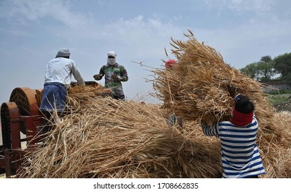 Prayagraj: Farmers harvest wheat crop at a field during a nationwide lockdown in prevent measure of COVID 19 Coronavirus in Prayagraj on Monday, April 20, 2020.