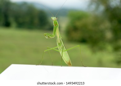 Praying Mantis with focus on the head, eyes, and arms and a blurred bokeh background.