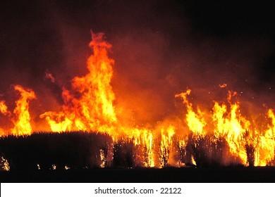 Pre harvest sugar cane fire, Queensland, Australia