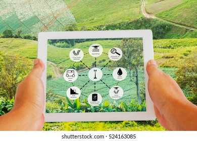 Precision Agriculture and Agritech concept. Hand holding digital tablet with Sensor network in Agriculture technologyon screen against agricultural field background.