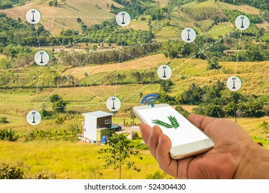 Precision Agriculture and Agritech concept. Hand holding smart phone connected with Sensor network in Agriculture technology against agricultural field background.