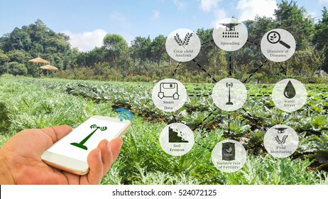 Precision Agriculture and Agritech concept. Sensor network in Agriculture technology network on framer using smart phone to connect the sensor system against vegetable field background.