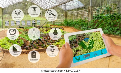 Precision Agriculture and Agritech concept. Sensor network in Agriculture technology network on framer using digital tablet to connect the sensor system against vegetable in green house background.