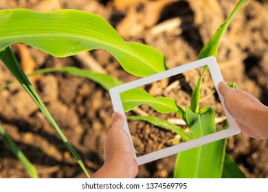Precision Agriculture Technology, application for plants nutrients deficiencies and diseases diagnosis