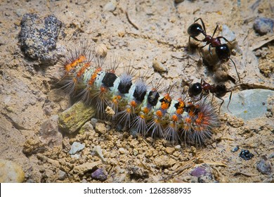 Predator ants macro closeup life scene