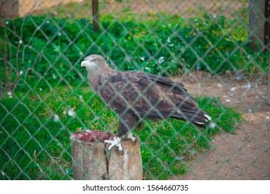 predatory bird Zoopark. Minsk. Belarus. Evropa