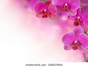 Predatory pink Orchid for texture