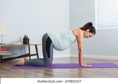 Pregnant young woman in all fours position exercising during prenatal on yoga mat. Hispanic pregnant woman practicing aerobics and stretching on mat. Mature pregnant woman exercising yoga.