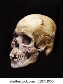 Prehistoric Human Skull Isolated on Black