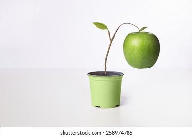 a premature growing apple on little vase