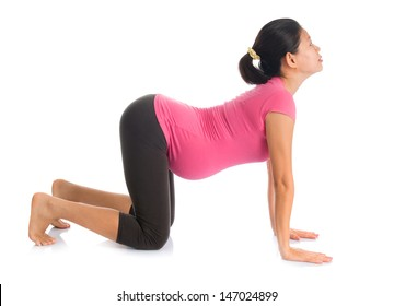 Prenatal yoga meditation. Full length healthy Asian pregnant woman doing yoga meditation at home, full body isolated on white background. Yoga cat positions.