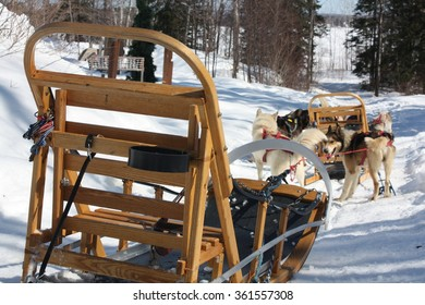 Preparation for a sleigh ride with huskies in Quebec, Canada.