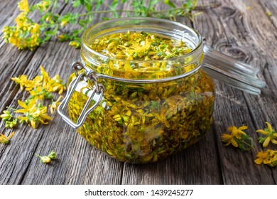 Preparation of St. John's wort oil from fresh blooming Hypericum perforatum plant