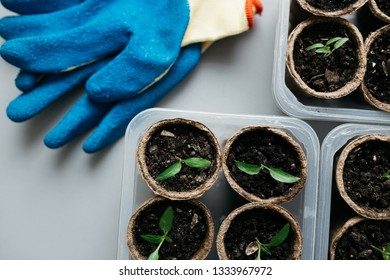 preparation for the summer season: gloves gardener to loosen the ground on the background of seedlings in a peat pot. Agriculture, garden, homegrown food, vegetables, self-sufficient home