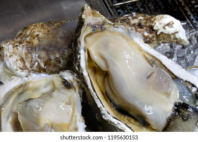 Prepare fresh Oyster for grill on grill which has fire in stove ancient  Thai style  in the kitchen / select focus