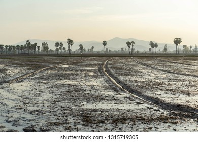 Prepare the soil Field palm tree in Phetchaburi Thailand