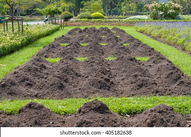 Prepare the soil for planting in  the plubic garden