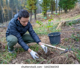 preparing holes in the forest for planting young trees