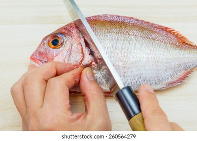 Preparing a sea bream in the Japanese style / chopping off the head of a sea bream