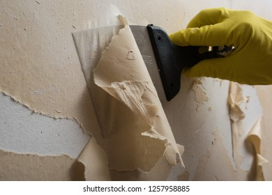 Preparing the wall for painting or sticking new wallpaper. Man in yellow gloves with a scraper in the process of removing old wallpaper. wetted with a special solution surface