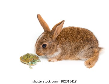 pre-race rabbit and turtle