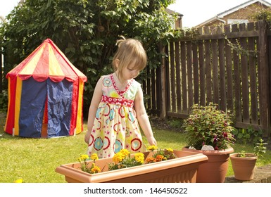 Pre-school child in a sunny garden, touching flowers in a tub