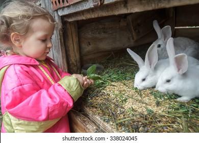 Preschooler blonde girl is feeding farm domestic rabbits with fleawort leaf